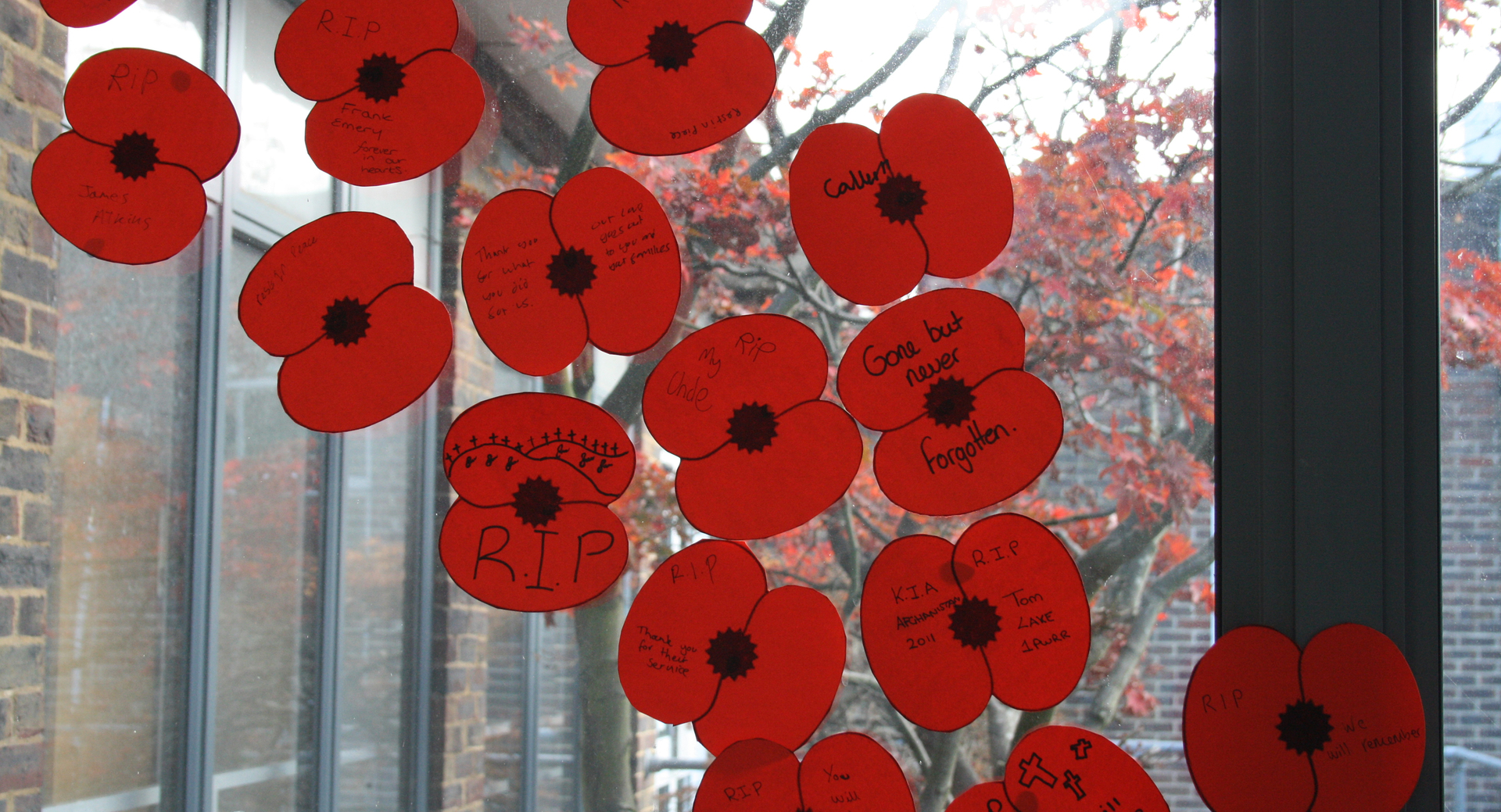 Staff and students write heart-felt messages to mark Remembrance Day